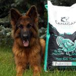 Canagan – free-run turkey dental [Top For Dog]