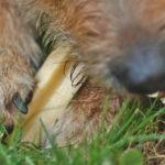 Naturalny serowy gryzak dla psa