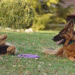 Nowy pies w rodzinie – jak to zrobić
