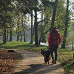 Zwiedzamy okolicę – Park w Radziejowicach