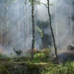 COVID zamknął lasy, czy susza to powtórzy?