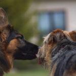 Jak baba z babą… o niełatwej relacji Eli i Tungi