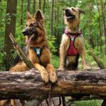 Podróże bliższe i dalsze – jak i gdzie podróżować z psem?