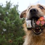 Szczęśliwe psie brzuszki z Sytą Michą