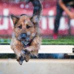 Nieco dłuższa przygoda z Dog Diving