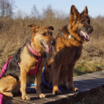 Poleski PN z psem – ścieżka Spławy
