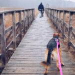Wyprawa na bagna – ścieżka Czahary