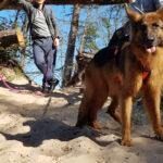 Dogtrekking, czyli piesza psia turystyka