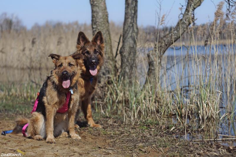 Przed odwiedzeniem danego miejsca sprawdź regulamin i czy wolno z psem.