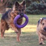 Czy wolno spuścić psa ze smyczy? – Nowe przepisy