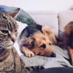 Pies w pościeli – jak to jest z tym spaniem z psem w łóżku?