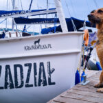 Rejs z psem – poradnik w pigułce